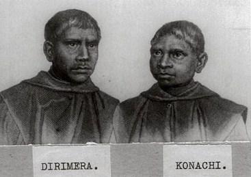 Dirimera_Konachi
